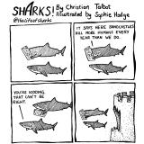 shark67