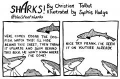 shark76